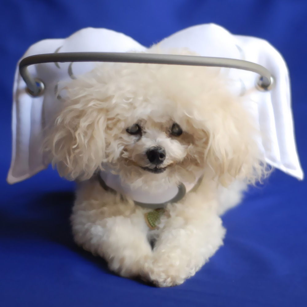 Muffin's Halo White Angel Wings - XSmall