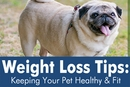 New Years Resolution: Combat Pet Obesity | EntirelyPets