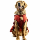 """One For Pets Safety Hooded Dog Raincoat - Orange Red 28"""""""