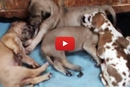 One Little Puppy Is Having A Nightmare, Watch What His Brother Does!
