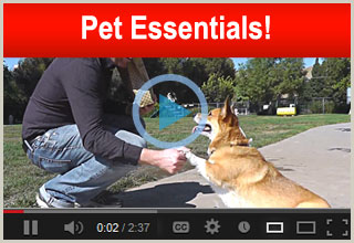 Outdoor Pet Essentials Video!