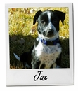 Pet of the Week: Jax 2/9/2015