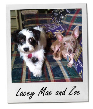 Pet of the Week: Lacey Mae and Zoe 1/12/2015