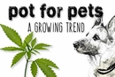 Pot for Pets: A Growing Trend