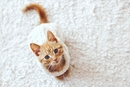 Prep Your Home for a Kitten in 9 Steps