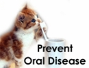 Prevent Oral Disease