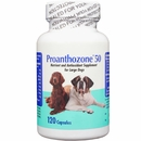 Proanthozone 50mg for Large Dogs (120 Caps)