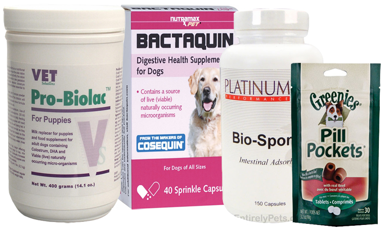 Probiotic Supplements for Dogs