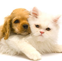 Protect Your Pets From Harmful Parasites