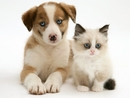 Puppy and Kitten products