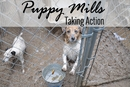 Puppy Mills: Taking Action