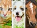 Quiz: Cat, Dog or Horse?