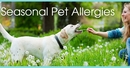Seasonal Pet Allergies