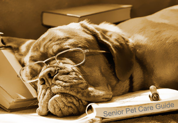 Senior Pet Care Guide