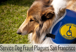 Service Dog Fraud Plagues San Francisco