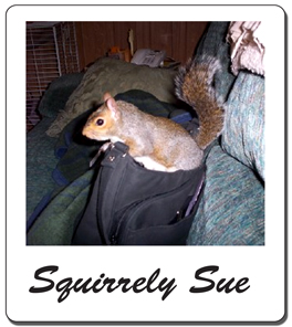 Squirrely Sue (1/1/05)