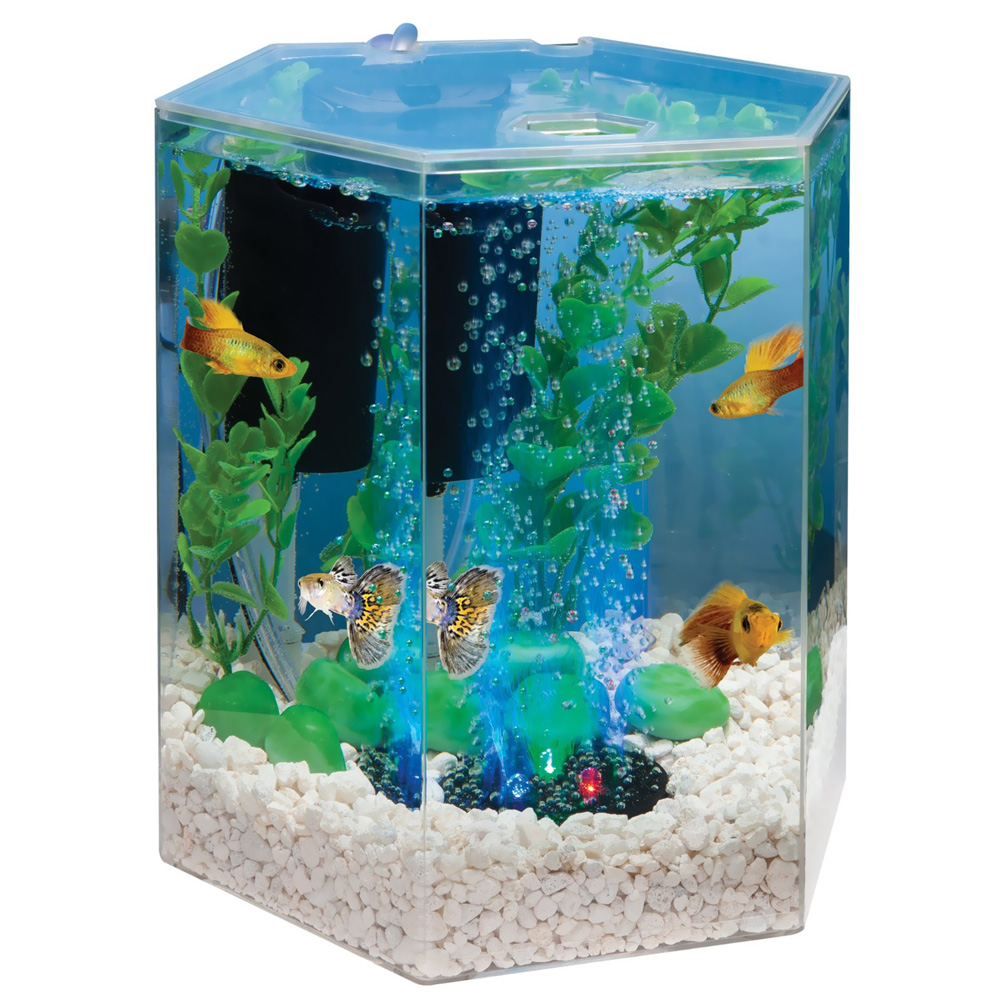 Image gallery tetra aquarium for Tetra fish tank