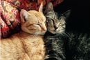 The 10 Cutest Types of Cat Hugs