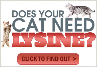 The Benefits of Cat Lysine