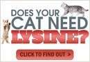 The Benefits of Cat Lysine and The Best Brands to Buy