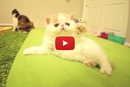 The Camera Turns On and This Adorable Kitten Has the Cutest Reaction!