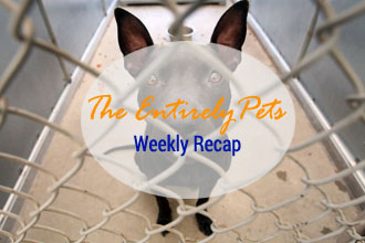 The Humane Society Faces Unfair Accusations in an Impending PR War and Viruses Threaten Cats in Pikes Peak and Dogs in New England - This and More in the EntirelyPets Weekly Recap (August 18-22, 2014)