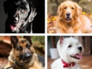 The Most Popular Dog Breeds of 2015