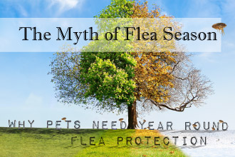 The Myth of Flea Season: Why Pets Need Year Round Flea Protection