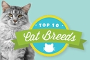 The Top Cat Breeds of 2015