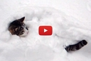 These Cats Have The Cutest Reaction To Snow!
