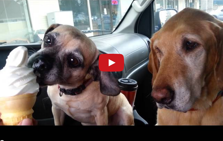 These Dogs Eating Ice Cream Will Make Your Day Complete!