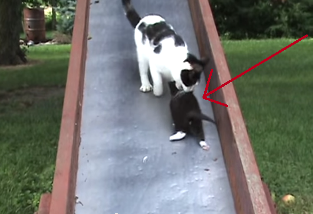 These Kittens Go Down the Slide and Regret Their Decision Immediately! Too Cute!!