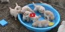 These Puppies Don't Need a Full Pool to Party! But They Would Really Like One...