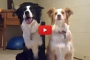 These Two Dogs Learned An Adorably Awesome Trick!