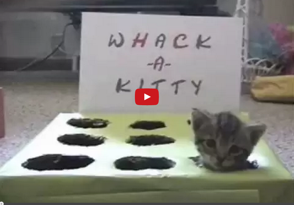 This Absurd Game of Whack-A-Kitten is Surprisingly Adorable- I Can't Look Away!!