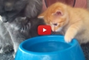 "This Adorable Kitten Learns to Drink Water and Wins ""Cutest Animal Ever"" Award!"