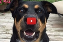 This Amazing Talking Dog Can Do More Than Just 'Speak'! Wow!