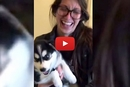 "This Amazingly Adorable Talking Husky Knows How to Say ""Mama!"""