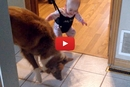 This Baby's Dog Teaches Him How To Bounce!