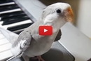 This Bird Can Hit All The Right Notes!