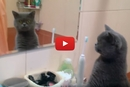 This Cat's Reaction To His Reflection Is Hilarious!