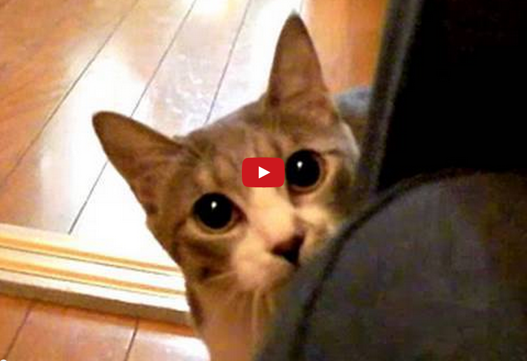 This Cat is a Master of Stealth- or at Least He Seems to Think So! The Ending Makes Me Laugh EVERY Time!!