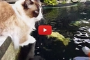 This Cat Loves Fish, But Not In The Way You Would Think!