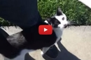 This Cat's Dad Tries to Leave and She Does the Cutest Thing to Stop Him!