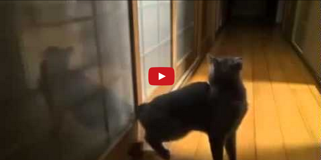 This Cat Wants His Owner's Attention- And You Won't Believe How He Gets It!!