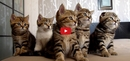 "This Chorus of Cavorting Cats Will Cure Your Case of ""Hump Day"" Blues!!"