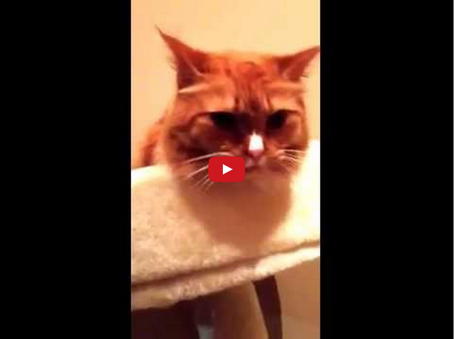 This Cute Cat Licking the Sound of Tape is Mesmerizing!!