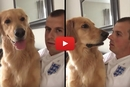 This Dog's Reaction To The Latest News From Dad Is Hilarious!