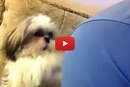 This Dog's Trick Will Make You Laugh Out Loud!