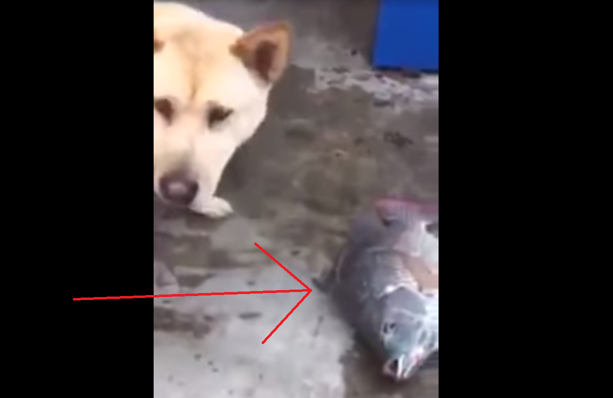 This Dog Comes to the Aid of Fish and It is Utterly Heartbreaking.
